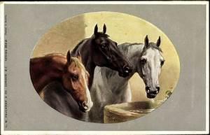 Pferde Kaufen Bremen : passepartout k nstler ansichtskarte postkarte drei pferde an der tr nke braun schwarz wei ~ Orissabook.com Haus und Dekorationen