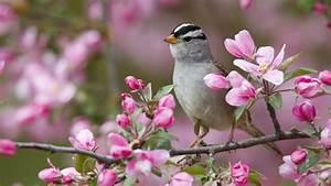 Spring Animal Desktop Backgrounds HD 7704 - HD Wallpapers Site