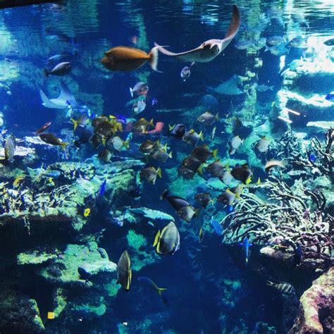 aquarium geant a visiter 28 images grande exp 201 rience visite du g 233 ant aquarium de
