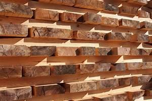 Buchenholz trocknen So geht's am besten