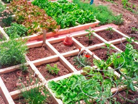 How To Keep Pests Away From Gardens