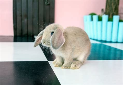 Picture Of Bunny Cafe, Seoul