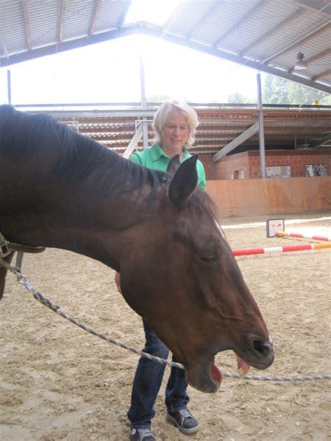 pferdeosteopathie wilke muehle  willingen sauerland