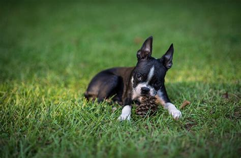 dogs eat poop healthy paws