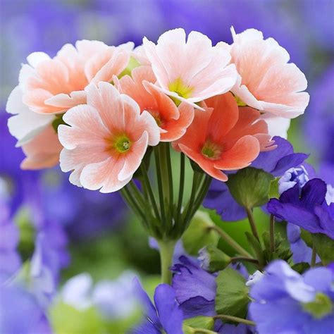 bright flowers bright flower wallpapers wallpaper cave