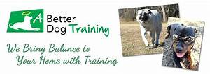 puppy videos for babies dog behavior training classes With dog discipline classes
