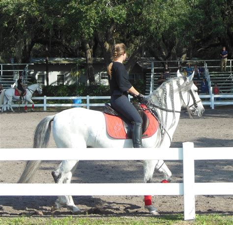 lipizzaner horses born travels