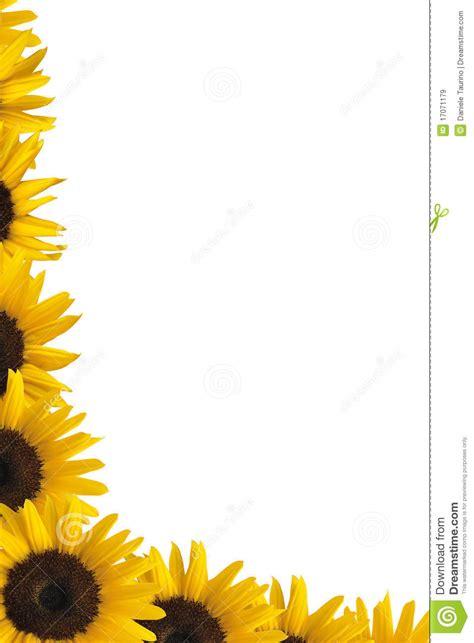sunflower border stock image image  design border