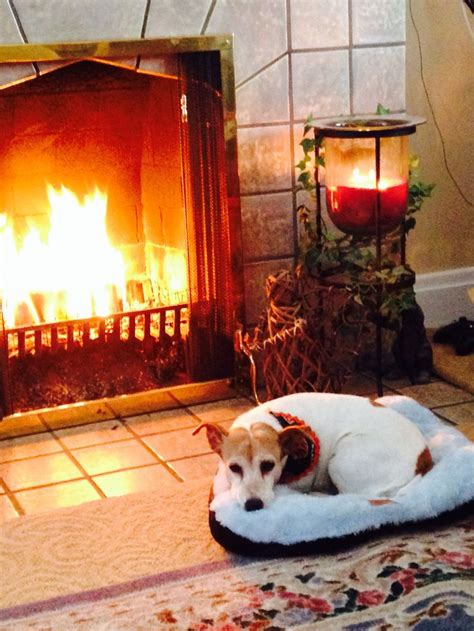 dogs for fireplaces fireplace place