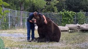 The Wild Hug : now that s a proper bear hug tactile animal can t stop cuddling his human best friend at ~ Eleganceandgraceweddings.com Haus und Dekorationen