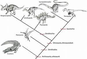 U00c9pingl U00e9 Par Dr  Godfrey Lambwell Sur Archosauria