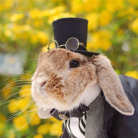 si鑒e du journal le monde quot puipui quot le lapin le plus stylé du monde