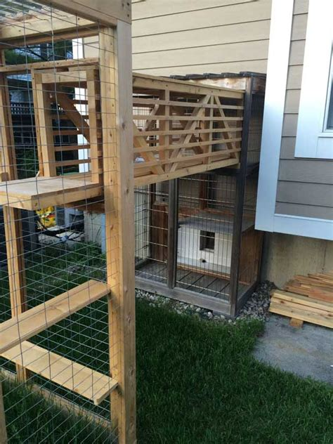 awesome outdoor cats walkway  house amazing diy