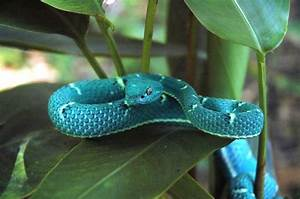 Did U KNow : These Amazing Snake Myths and Facts About Snakes