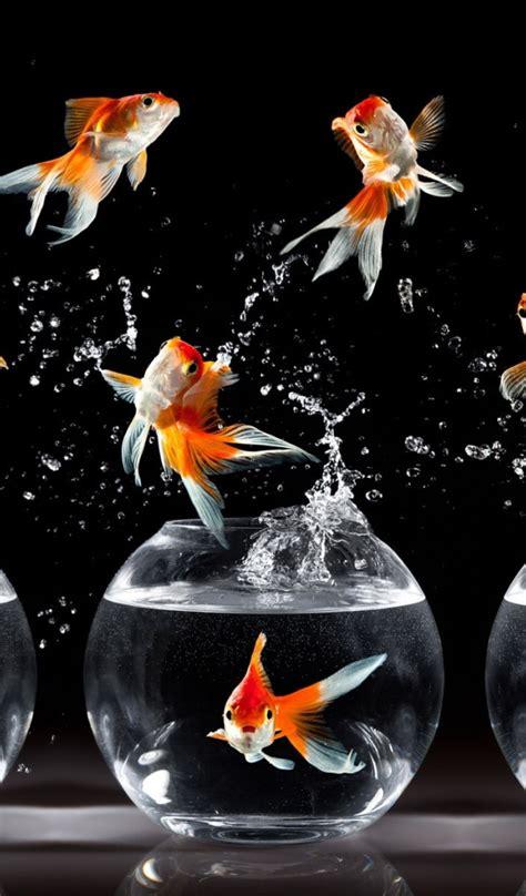 dancing fish desktop wallpapers