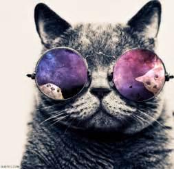 galaxy cats galaxy cat on