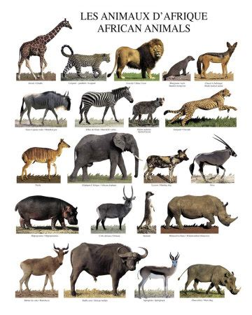 About Animals and Different Groups Included in their