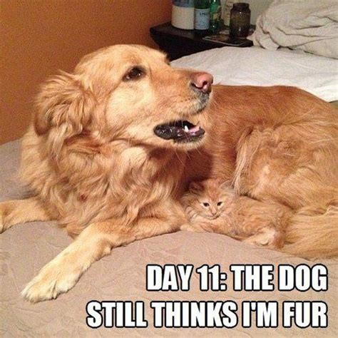 Funny Dog And Cat