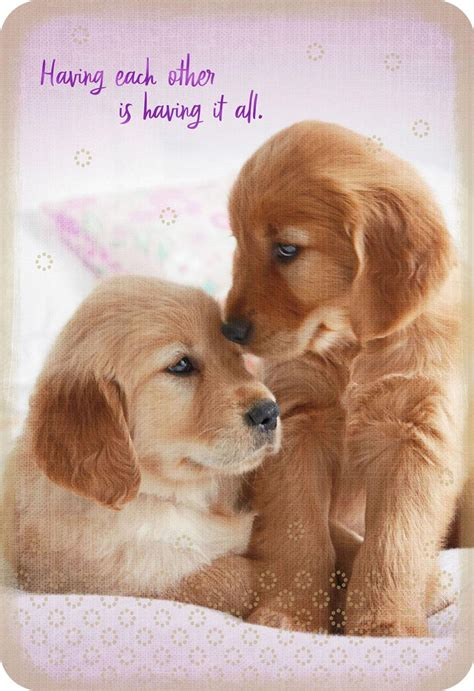 puppy dogs romantic love card greeting