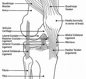 Common Knee Tests In Orthopedic Examination