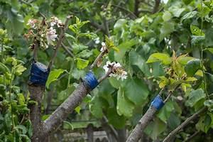 Prix D Un Citronnier : greffe sur l 39 arbre fruitier image stock image du barre ~ Premium-room.com Idées de Décoration