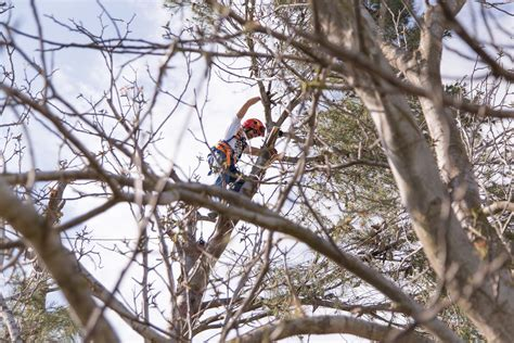 tree pruning tree pruning and removal how to tell when it s time friendly tree experts