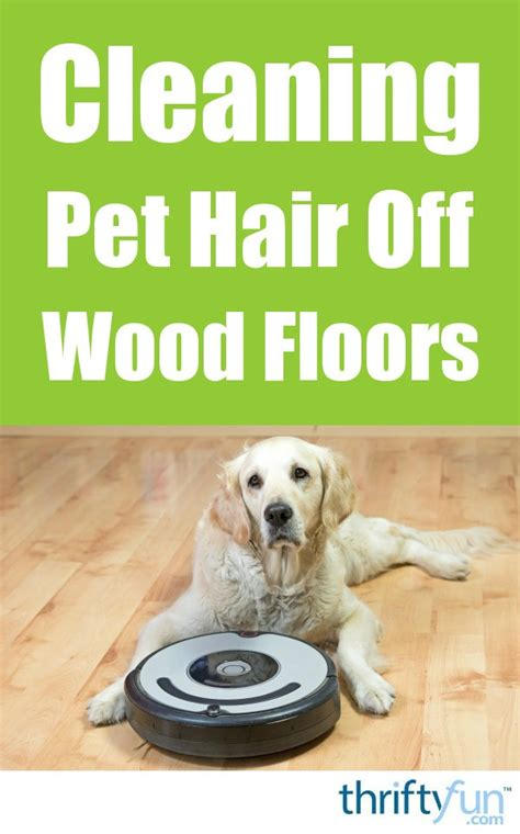 cleaning pet hair  wood floors thriftyfun