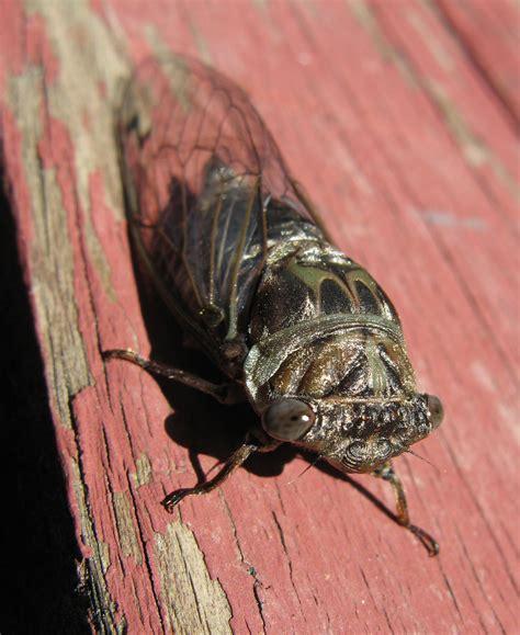 Bugs In by Big Adirondack Bugs