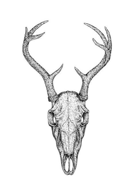 Deer Skull Black White Ink Artwork Eugenia Hauss