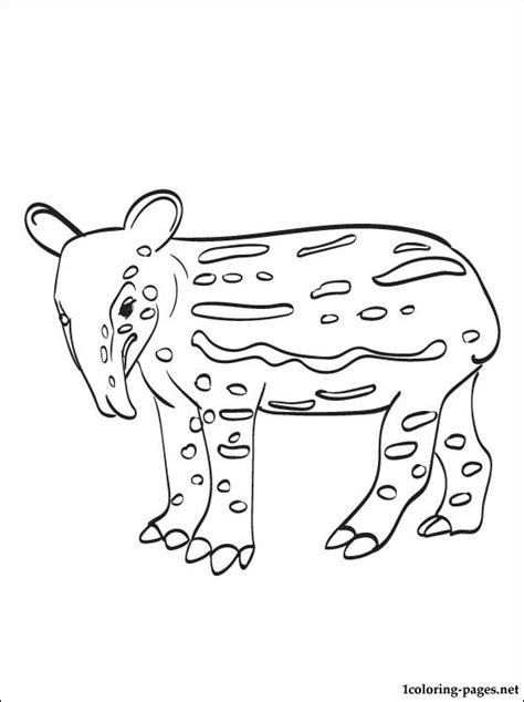 tapir coloring page   coloring pages