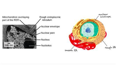 endomembrane system article khan academy