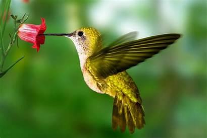 Hummingbird Wallpapers Desktop Wallpapersafari Code