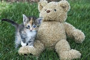 facts about calico kittens with pictures ehow