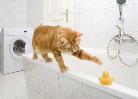 pet bath time 101 usa pet cover