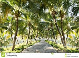 Walkway With Coconut Tree In The Garden Royalty Free Stock ...