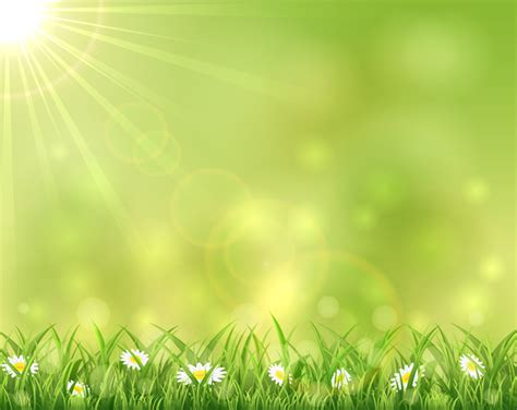 sunny background  grass  flowers vectors material