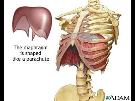 Diaphragmatic Breathing: Life changing video - YouTube