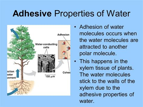 Topic 22 Water  Ppt Video Online Download