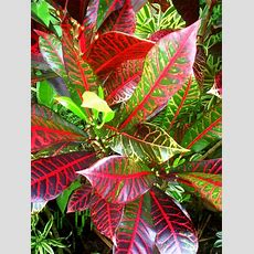 Photo Gallery The Amazing Colors And Patterns Of Tropical