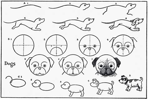 drawing cute animals  easy   steps  children
