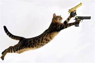 cat gun all wallpapers cats with guns wallpapers