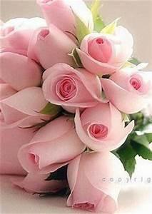 Langage Des Fleurs Pivoine : i love you fleur jardin fleurs belles fleurs ~ Melissatoandfro.com Idées de Décoration