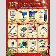 12 Days Of Christmas 2015  Jeffers Blogs