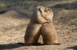 EPA Poisons Prairie Dogs; Then They Bleed to Death & Harm ...