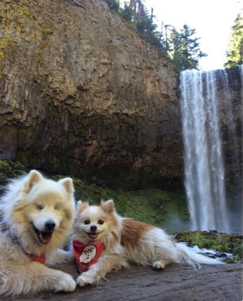dog puppy blind friends wonderful guide indeed pomeranian friend need hoshi dogwithblog