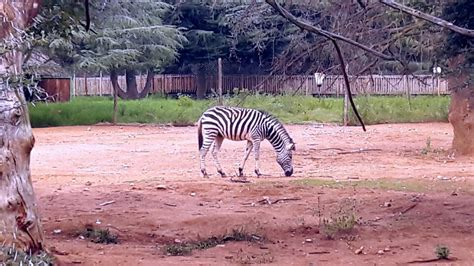 zoo johannesburg destination