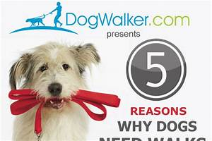 Clever Daycare Names 47 Catchy Dog Walking Business Names Brandongaille Com