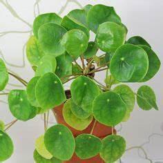 Pflanze Für Dunkle Räume : sonnig zimmerpflanzen pflege flower gardens ~ A.2002-acura-tl-radio.info Haus und Dekorationen