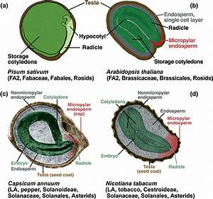 Biodiversity Of The Structure Of Mature Seeds Of