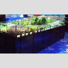 Tropical Aquarium Manufacturing Plants Station  Aquarium